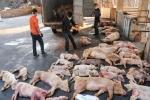 Đề nghị cấm nhập khẩu thịt heo từ các nước có dịch tả
