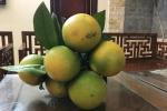 Người Hà Nội cẩn trọng kẻo ăn cam Cao Phong 'nhái'?