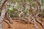 Huyền bí những 'khu rừng ma ám' nổi tiếng thế giới