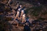 Australia di dời người dân để nhường chỗ ở cho chim cánh cụt tí hon