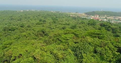 Rừng nguyên sinh Đảo Cồn Cỏ (Ảnh: NTMP)