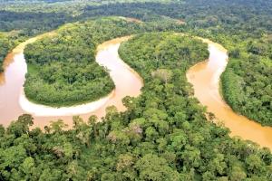 Điều gì xảy ra nếu rừng Amazon biến mất?
