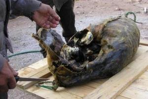 'Tê liệt vị giác' với đặc sản chim nguyên lông nhồi trong hải cẩu thối rữa ở Bắc Âu