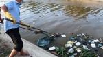 Kinh hoàng xác heo vứt nổi mặt kênh giữa tâm bão dịch tả heo châu Phi hoành hành tại Ninh Thuận