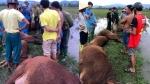Sét đánh trúng 6 con bò chết tại chỗ, 1 người bị thương
