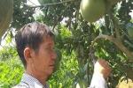 Sơn La: Đầu tư cây vàng, thu vườn cây ăn quả bạc tỷ