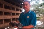 Xóm giềng trăm người đi Tây 'chui', lão nông Hà Tĩnh nuôi chim làm giàu