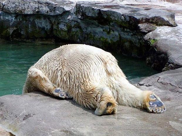 Hôm nay phải đi làm à...