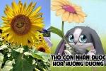 Truyện cổ tích cho bé: Thỏ con nhận được hoa hướng dương
