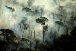Ám ảnh những thiên tai tàn khốc trên thế giới trong năm 2019