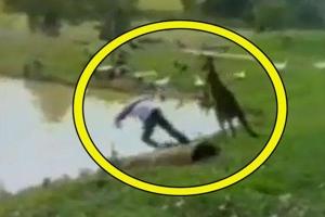 Mải câu cá, nam thanh niên bị kangaroo đá 'lộn cổ' xuống hồ nước