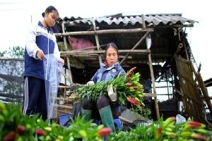 'Thủ phủ' hoa tại Hà Nội nở rộ giữa dịch Covid-19: Tưởng thắng vụ mà thành bại, hoa cười nhưng người khóc