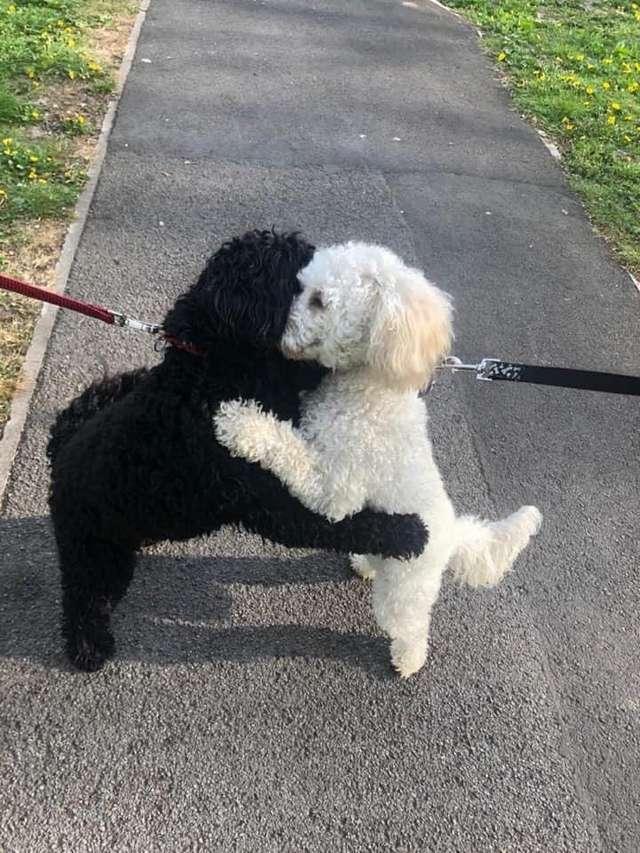 Hai chú chó ôm lấy nhau hạnh phúc trong sự ngỡ ngàng của chính hai chủ nhân.