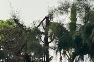 Học sinh Hải Dương tỉa cây bị điện giật tử vong: Trường điều đi lao động... 'bằng miệng'