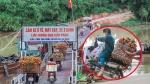 Cây cầu 'tử thần' không thể không đi của dân chở vải ở Bắc Giang
