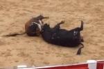 Clip: 2 con bò tót nặng hơn nửa tấn chết gục tại chỗ chỉ sau một cú húc