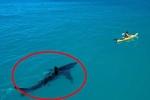 Drone quay cảnh cá mập ẩn nấp bên dưới người lướt sóng ở Nam Phi