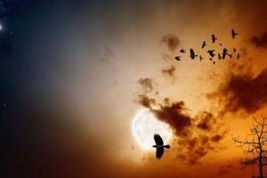 Rùng rợn ngôi làng 'tử khí' hàng trăm con chim tìm đến cái chết