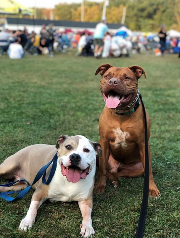 Hai chú chó Roman và Climby thân thiết không rời được nhiều người quý mến.