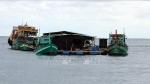 Kiên Giang: Nuôi cá lồng bè trên biển thu về hàng nghìn tỷ đồng/năm