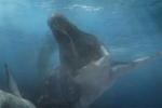 Video: Thủy quái sức mạnh gấp 4 lần khủng long bạo chúa thời tiền sử