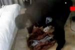 Lật bộ mặt nghịch tử giết mẹ để hưởng gói tiền bảo hiểm
