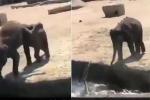Video: Voi con tinh nghịch đẩy bạn xuống nước khiến cộng đồng mạng... tan chảy