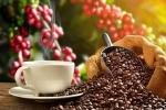 Giá cà phê hôm nay ngày 20/7: Tiếp tục tăng mạnh, vượt mốc 33.000 đồng/kg