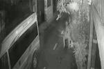 Clip: Trộm dùng súng điện bắt chó nhanh như chớp ở Đồng Nai