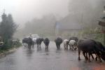Dự báo thời tiết hôm nay 2/8: Thanh Hóa đến Quảng Bình có mưa to đến rất to