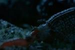 Video: Ốc sên nghiền nát giun đất bằng 6.000 chiếc răng