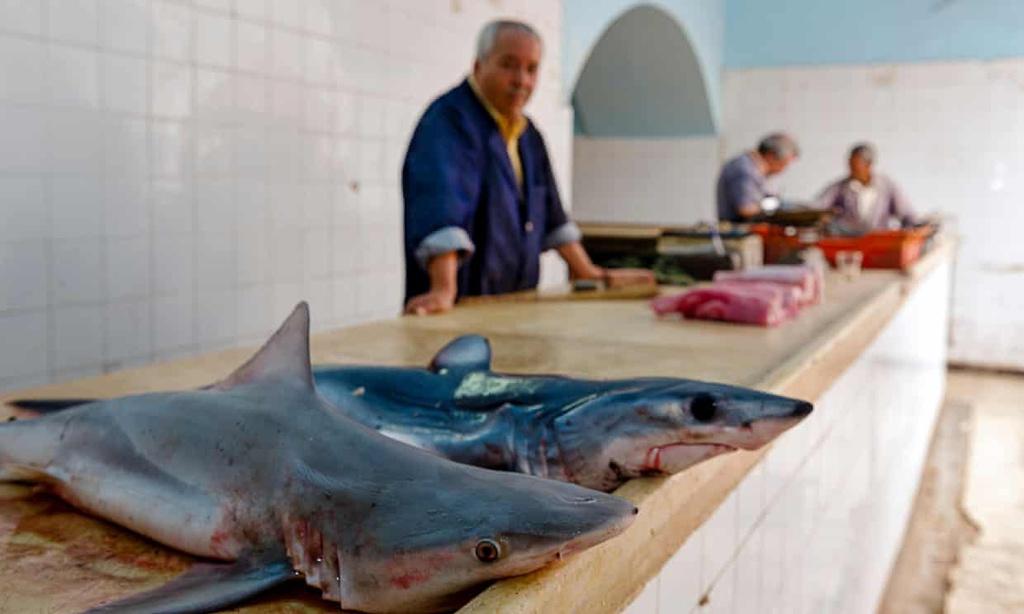 Tunisia có mọi loài cá mập, từ cá mập trắng đến cá nhám gai. Ảnh: Alamy.