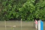 CLIP: Chú chó bơi hơn 1 km trong nước lũ đi tìm chủ và giây phút tìm tới đích đầy xúc động
