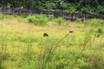 Sân vận động tiền tỷ thả trâu, bò: Mất trộm nhiều đồ