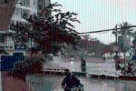 Clip: Bão số 12 quật đổ cây xanh, thổi bay người đi đường