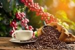 Giá cà phê hôm nay 22/12: Robusta chưa rõ đà tăng, chất lượng cà phê vụ mới Việt Nam đang rất tốt