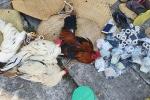 Cảnh sát cải trang để đột kích sới gà