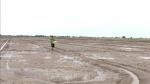 Sóc Trăng: Khuyến cáo nông dân xuống giống sớm để 'né' hạn mặn cuối vụ