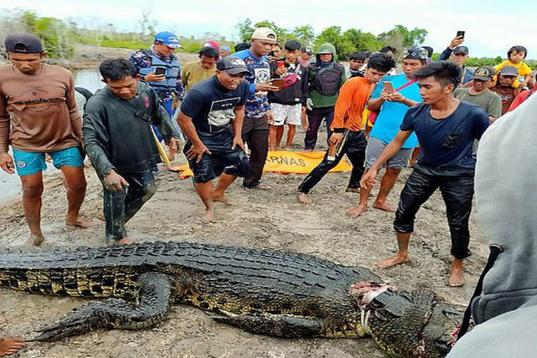 Con cá sấu bị người dân địa phương bắt giữ