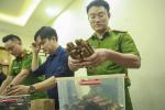 VIDEO: Cận cảnh số lượng 'khủng' xì gà mà nam tiếp viên hàng không nhập lậu về Hà Nội