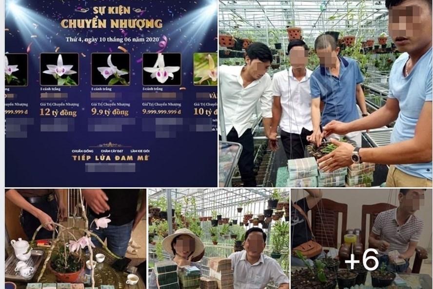 Hình ảnh trong một diễn đàn chơi lan đột biến, nhiều thương vụ mua bán lan lên tới tiền tỉ diễn ra tại một số địa phương thời gian qua. Ảnh: Chụp màn hình.