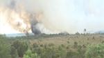 Kiên Giang: Cháy gây thiệt hại hàng chục hecta rừng tràm đã khai thác