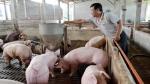 Giá lợn hơi hôm nay 16/4/2021: Dao động từ 72.000 - 76.000 đồng/kg