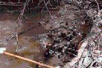 Đi hái măng, kinh hãi khi phát hiện thi thể đang phân hủy dưới sông: Hiện trường có gì?
