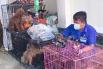 Cán bộ phường nuôi giúp đàn chó của gia đình F0 đi cách ly: 'Chăm sóc vài chú chó đâu là vấn đề'