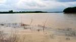 Bình Thuận mưa lớn kéo dài, hơn 1.200ha đất sản xuất ngập úng, thiệt hại gần 10 tỷ đồng